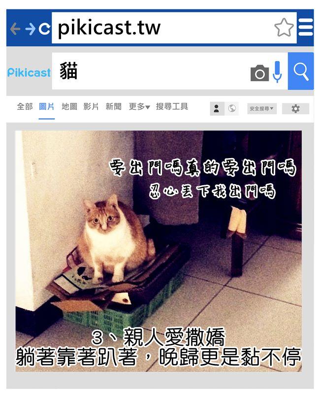 剛被抓傷,立刻跳上膝蓋呼嚕嚕...沒用的貓奴還是立刻被收服QQ