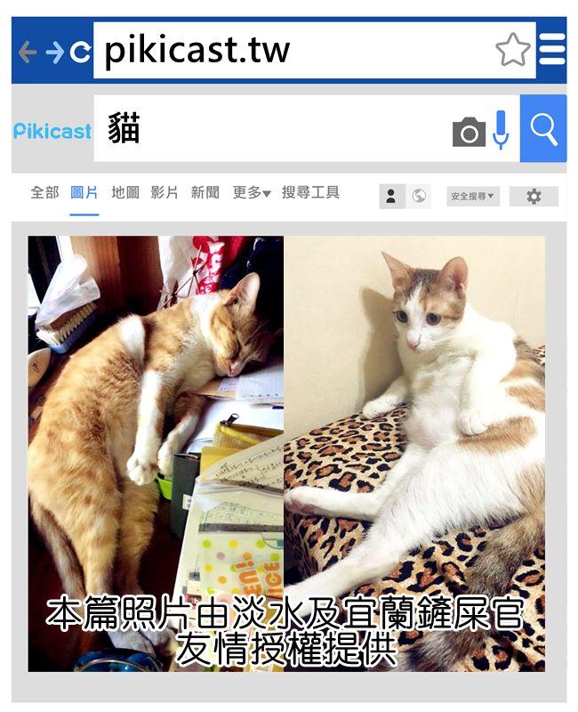 左邊是臺灣貓,右邊是老爺子貓 超級可愛♥ヾ(*ΦωΦ)ツ♥
