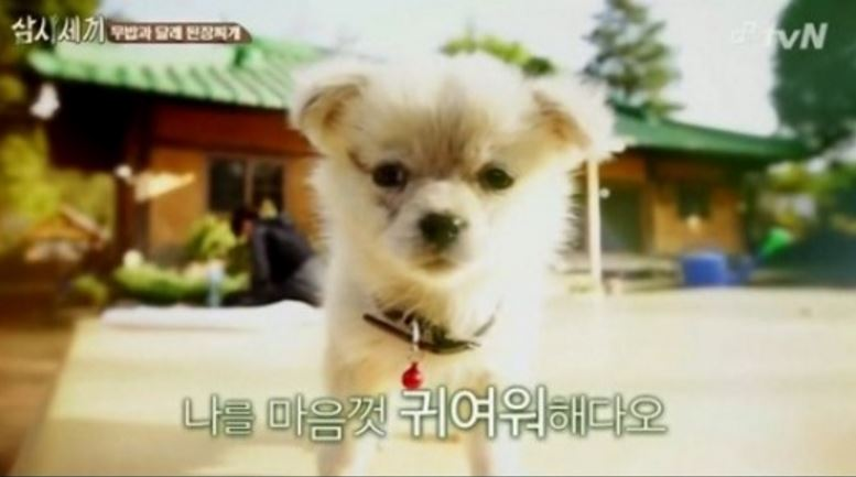 第一隻寵物狗~~Minky!到第二季更晉升為狗媽媽生了2隻可愛的小狗狗!