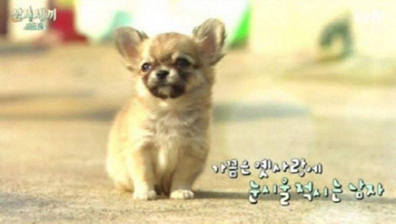 ***第二季魚村篇的寵物狗Sanche(桑切) 不要看他嬌小,他可是風度翩翩的男生喔~~