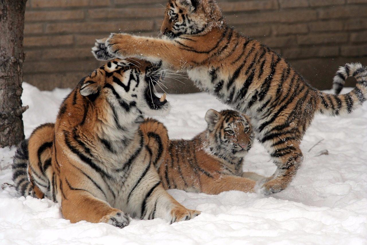管那麼多的話,要不要乾脆規定屬虎的媽媽都不准進校門,就像屬虎的不能當伴娘一樣...