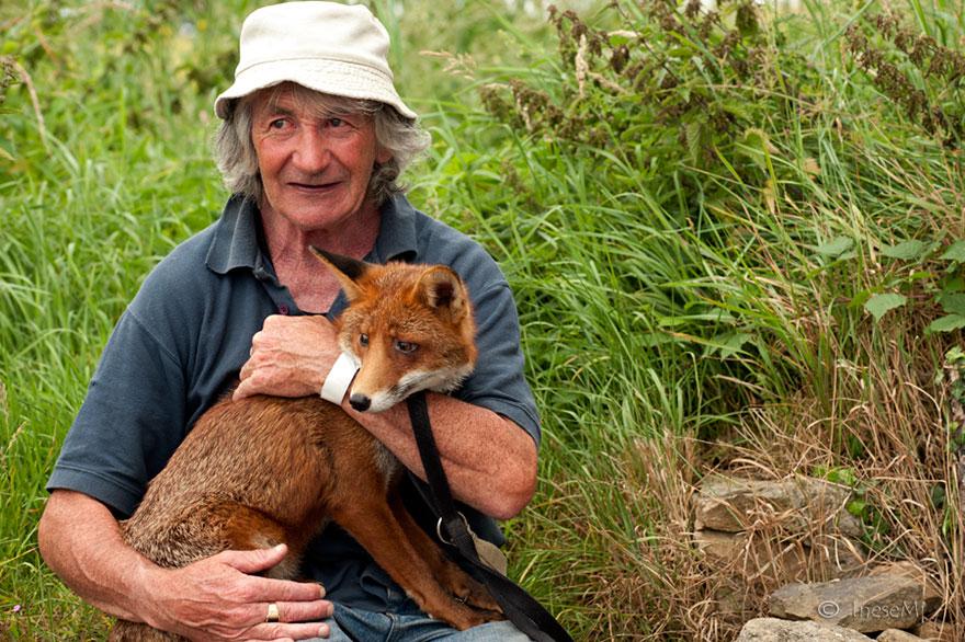 而且像是命運般的,奇芬爺爺在帶著可瑞尼去動物醫院的路上,竟然發現了另一隻被狗咬傷而倒在路邊的狐狸亨利