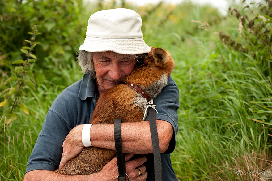 感動的奇芬爺爺將可愛的狐狸兄弟緊緊的擁入懷中,這一次爺爺決定不要再錯過他們了(?)
