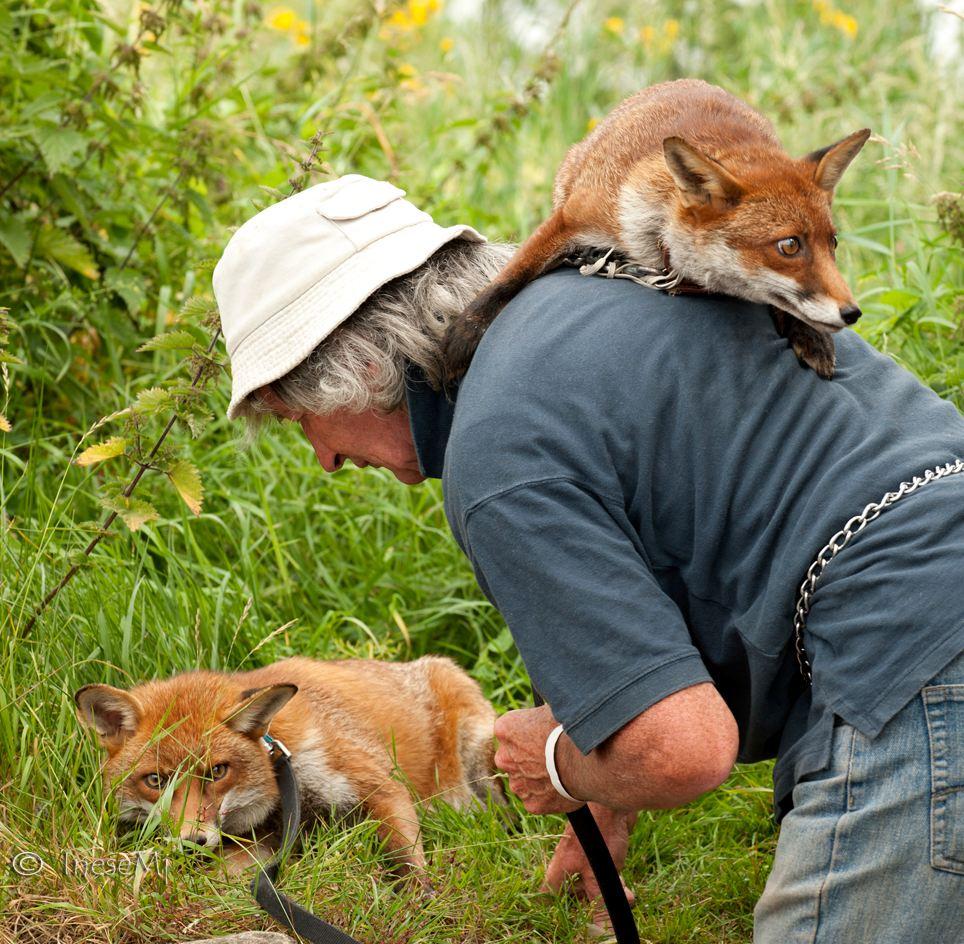 雖然無法用言語溝通,但只是靠著彼此的眼神和心意就能交流的奇芬爺爺和狐狸兄弟們溫馨的日常…