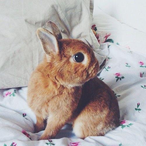 今天小編想要通過這一組可愛的兔子 來給你驅走內心&身體的寒冷!