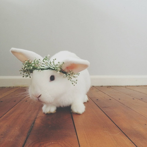 溫暖到了嗎?是不是覺得這麼可愛的兔子,只是看看根本不能滿足嘛...如果能親自感受一下它的毛茸茸才更暖暖呢☺ლ(°◕‵ƹ′◕ლ)...:D