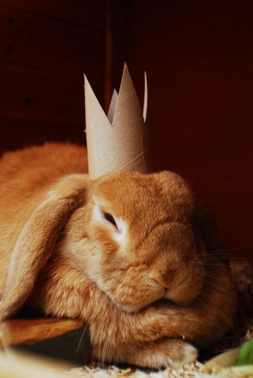 希望今天的兔子給你帶來了安慰唷♥
