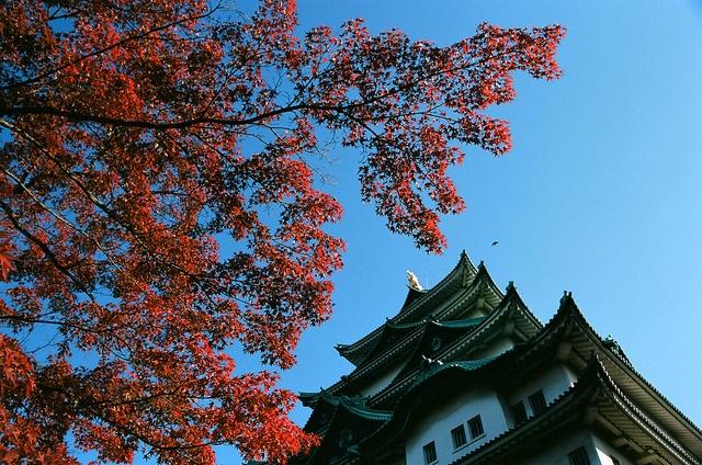 但是,在名古屋有一種拉麵叫做......「臺灣拉麵」