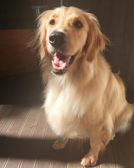 #3. 黃金獵犬 – CNBLUE 李正信