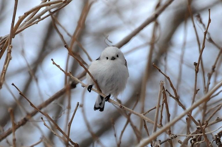 #4. 相思鳥 – VIXX N