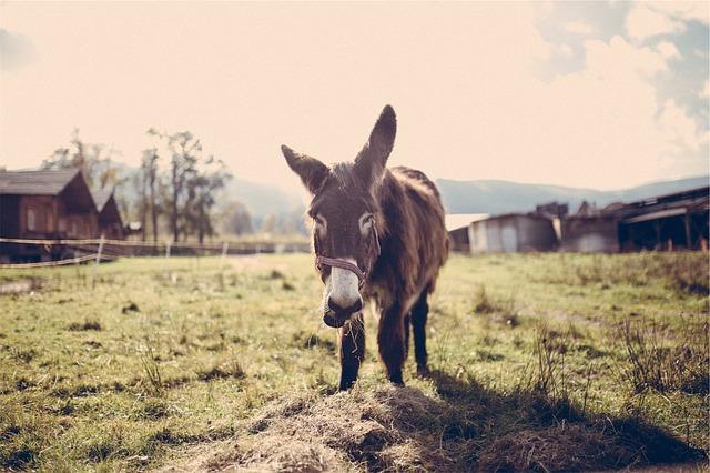 這個故事是說,有隻驢子站在兩團一模一樣的乾草中間,要吃哪一堆都可以,牠卻因為遲遲無法決定要先吃哪一邊,就這樣活活餓死!  (雖然有點誇張,不過我就是這樣QAQ)