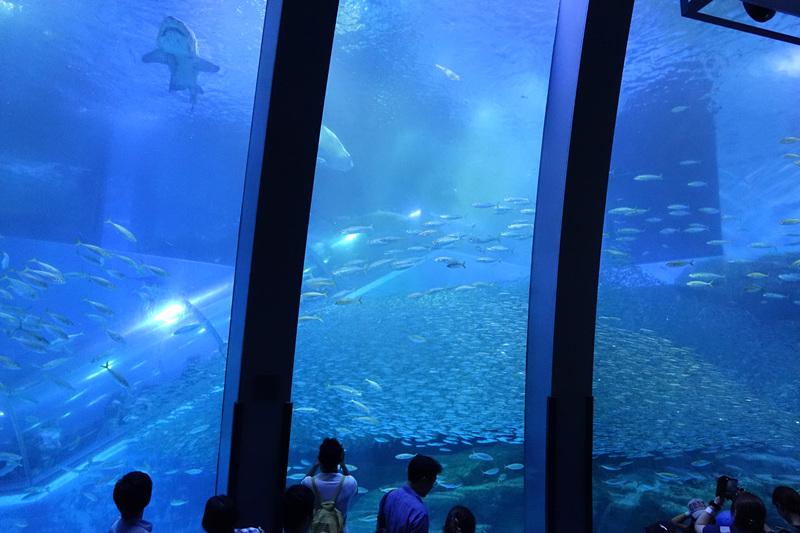 園區裡的水族館是日本規模最大的水族館,還有許多戲劇曾在園內取景