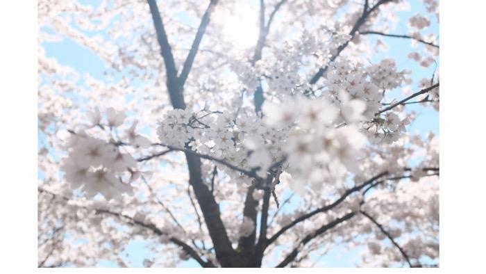 02 海雲台迎月路   迎月路以蔚藍的大海、白沙灘、山茶樹及松樹相互輝映呈現出的絕佳景致而被列為釜山八景之一,很多情侶在夜晚時也會來這裡散散、吹吹海風。在春天時,迎月路的道路旁還會開滿櫻花,充滿粉色氣息~如果運氣好的話,在夜晚散步時還可以遇到滿月~