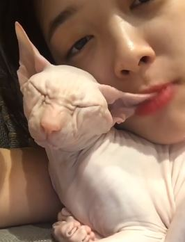 不過今天雪莉上傳的影片,卻不小心觸怒了愛貓粉絲的敏感神經。因為雪莉在自拍影片中,明明貓咪睡著了,但雪莉卻像是希望貓咪再陪她玩一下的先是輕咬了貓咪的耳朵