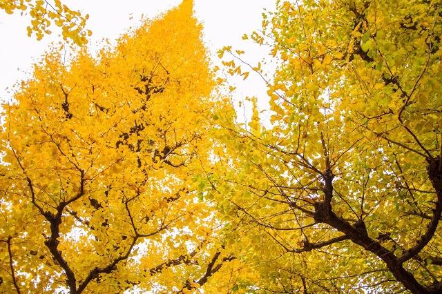 2. 三清洞路(삼청동길)  從景福宮石牆路一路沿著古牆走到三清公園,沿路充滿古典與文藝氣息,在秋天的時候會看到沿路兩旁鮮紅的楓葉及黃色的銀杏,路旁還有小而雅緻的畫廊、服飾、裝飾品的販賣,因此也被稱為〝畫廊之街〞。三清公園也是韓劇的熱門拍攝景點,包括「我的名字叫金三順」及「流氓醫生」都在這邊取景,有個傳說是只要跟心愛的人在這邊散步,就能廝守終生,相愛的情侶們一定不能錯過喔!