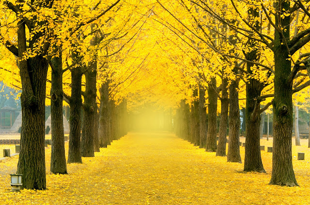 #江原道賞楓景點  5.南怡島(남이섬)  因為「冬季戀歌」聞名的南怡島,在冬天白雪皚皚的優美風景,讓許多外國遊客爭相走訪。除此之外,秋天一整片紅色樹林的景致也是美不勝收,周遭還有「來自星星的你」曾經取景的〝小法國村〞,以及最道地的春川炒雞,非常值得一訪!