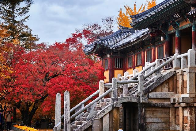 #慶尚北道(慶州) 賞楓景點  7.慶州佛國寺(불국사)  佛國寺是位於慶尚北道的一間佛寺,寺內有7件文物被列為韓國國寶,包括多寶塔、釋迦塔、藍雲橋和兩座金銅大佛等,在1995年也被列為世界文化遺產之一。它的歷史悠久,也會吸引韓國的佛教徒前來參拜。慶州距離釜山有一個小時的車程,有機會的話一定要到佛國寺欣賞風景,絕美的景致絕對值得長途跋涉。