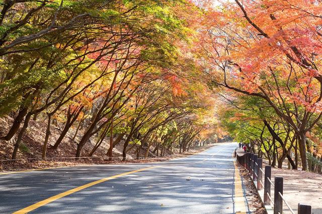 #全羅北道賞楓景點  9.內藏山國立公園(내장산국립공원)  內藏山是韓國第八座國家公園,取名源自於山中有山且蜿蜒的山巒。隨著秋天到來,來這邊賞楓的遊客總是爆滿!