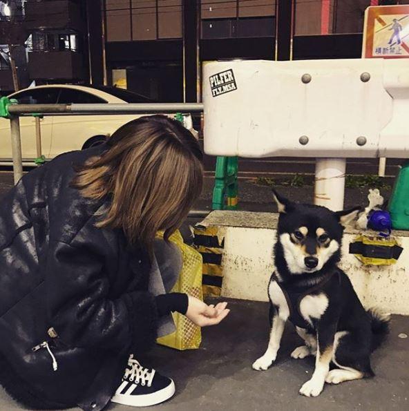 (↑其實賴冠霖想表達的是這個) 原來賴冠霖想說的是自己喜歡小狗,特別喜歡的「西巴」其實就是柴犬在韓文中的發音,但是因為賴冠霖發音太重,聽起來像是髒話,才會讓他自己說完一秒之後也秒驚慌