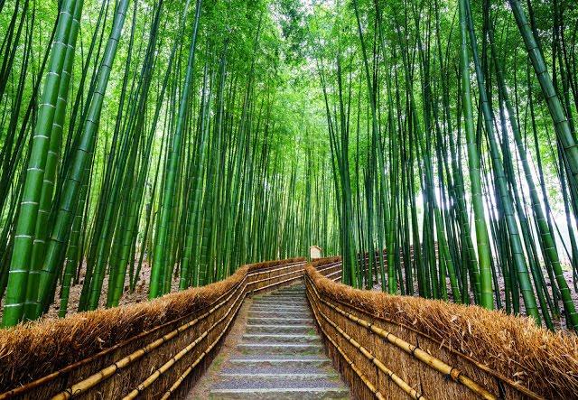 2. 嵐山  如果你是第一次來京都,又想要選擇一個京都的近郊景點遊玩,小編就會推薦你把嵐山排入行程中!因為嵐山算是入門款的京都近郊景點,距離京都不算太遠,觀看的景點也很多,加上如果你是春、秋兩個季節來還可以賞櫻花、楓葉!  而且小編更推薦大家可以搭嵐山小火車沿路玩嵐山,可以欣賞到沿途不同的風光,也可以多花一點時間在『嵐山站』,因為此站的景點最多,像是竹林の道、渡月橋、嵐山大街、常寂光寺、野宮神社等