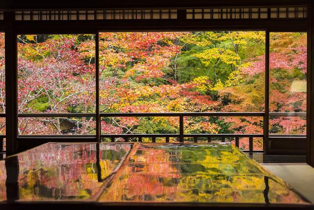 8. 琉璃光院  琉璃光院大概是小編見過最如詩如畫的庭院了,雖然是個小寺院,但其清寂的氛圍,讓人彷彿置身在世外桃源!因為造訪的人不多,讓這個地方也變成賞楓的秘境之一,如果你想一個人安靜地欣賞染紅的楓葉景緻,小編真的超級推薦這個近郊景點!  以為就只有楓葉可以看嗎?琉璃光院真正厲害之處在於,春季的蓊綠景色,更是讓小編的日本朋友一致推薦~~~~~