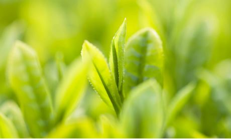 """*綠茶 Green tea extract-抗菌 綠茶當中含有抗氧化劑以及兒茶素,能夠有效抵抗老化、抑制細菌!是非常常見用來""""預防""""痘痘的病發!市售產品中也很常見到添加綠茶的保養品!"""