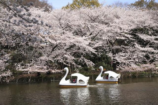 4. 上野恩賜公園  上野恩賜公園幅員廣闊,有美術館、博物館、動物園等需買票的設施,但也有許多美麗的神社寺廟可以免費參訪,另外,春天的上野恩賜公園更是遠近馳名的賞櫻名所。