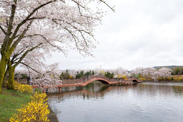 2. 普門湖 보문호  普門湖為位在明活山城下的人工湖,其步道與腳踏車道因為沿路的美麗景緻,吸引眾多遊客健行。雖然碰上櫻花季時,慶州市內全都可以看到櫻花紛飛,但其中又以普門湖周圍的櫻花樹最受當地人推崇,而逛完普門湖也可以順道前往附近的慶州樂園。