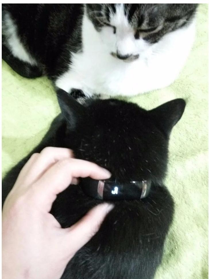 而這位貓奴為了了解貓大人的睡眠時間,將智慧型手環綁在貓的脖子上~~~結果得到的結論讓不少人大吃一驚