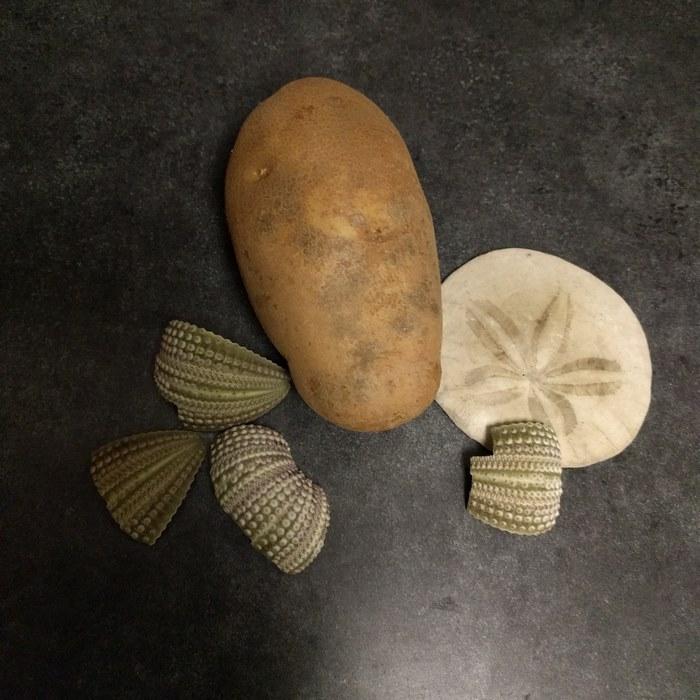 愛麗兒公主 #馬鈴薯版