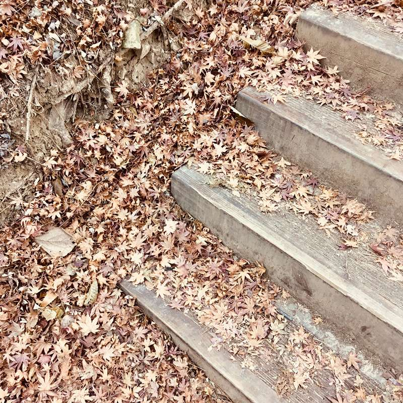 走上去的好處是可以邊欣賞風景邊慢慢拍照,像楓葉怎麼拍怎麼美!