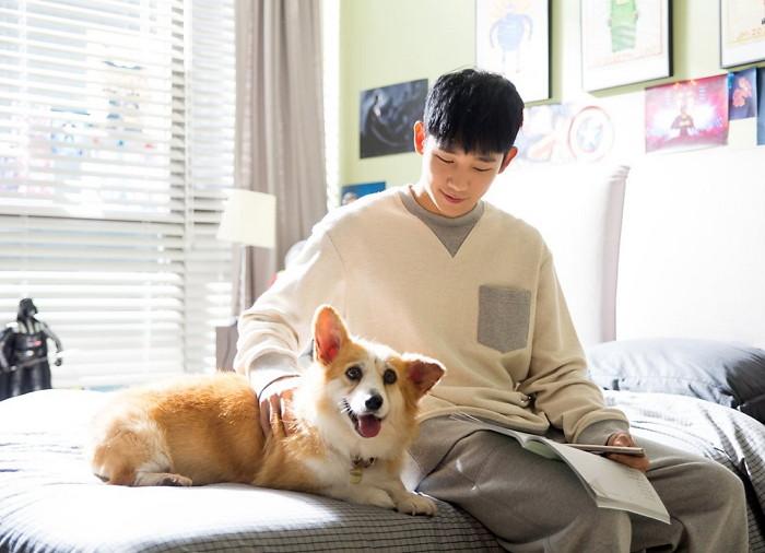 這時候,如果韓劇裡的角色剛好又有一隻寵物狗,肯定又大加分阿!不過,但應該不少人好奇韓劇中寵物狗的收入吧?