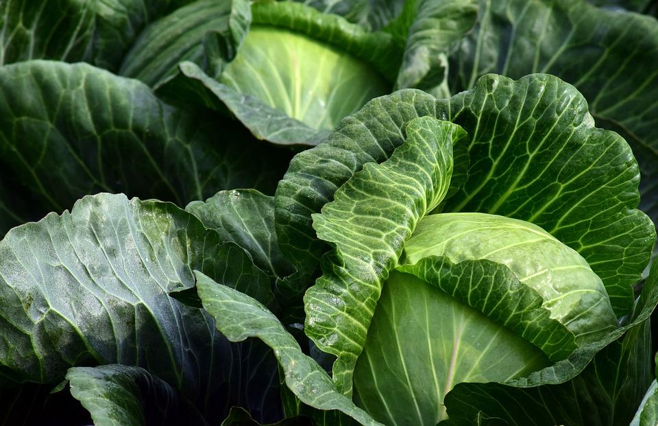 第1名 : 綠色蔬果 41.0% 第一名就是綠色蔬菜啦~~隨著喜愛吃肉的人數增加,吃肉必備的生菜們也成為韓國人最常吃的蔬菜