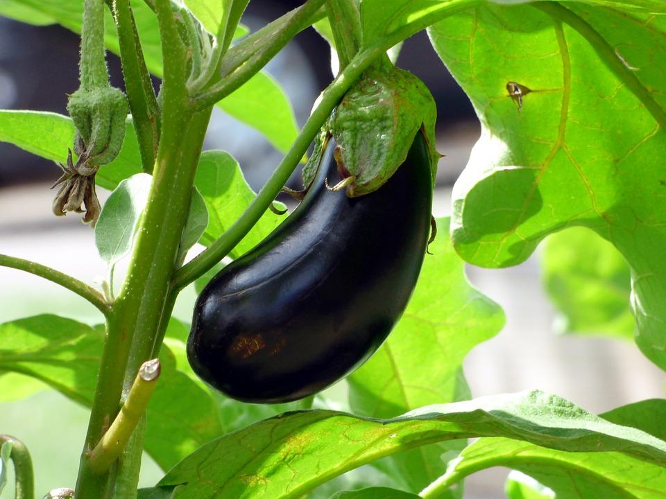 第5名 : 紫色蔬菜 1.6% 除非去飯店自助餐或是愛吃蔬菜的人,不然很少會在韓國人的餐桌上看見紫色蔬菜!尤其是茄子,更是不少韓國人不敢吃的食物之一