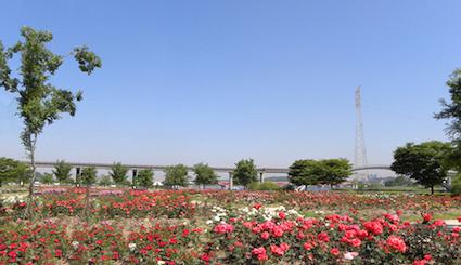 楊花漢江公園(양화한강공원):美麗的風景加上身邊的戀人一起在楊花漢江公園散步約會最適合不過了!