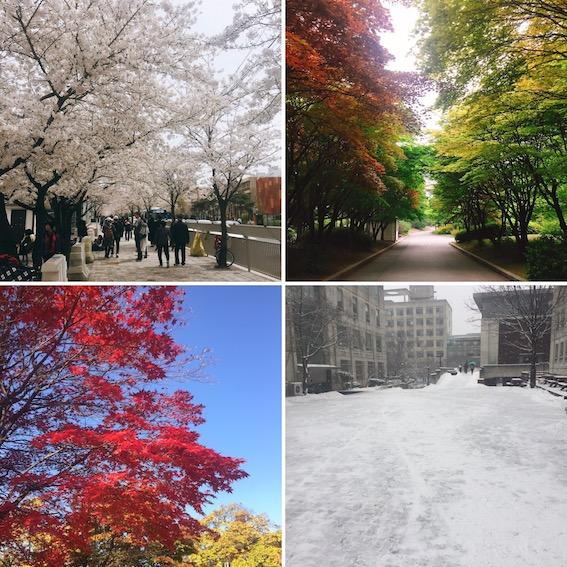 韓國是一個四季分明的國家,春天可以賞花、夏天可以去海邊玩水、秋天有銀杏和楓葉、冬天當然是賞美美的雪啦!今天要和大家介紹每個月份值得去的地點和必看的美景哦~