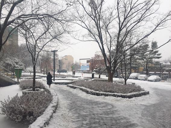 1月:太白、江陵、麟蹄、華川、平昌、陽平 特點:賞雪最美的地區