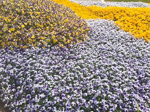 2月:統營、南海、巨濟、麗水、茂朱、 特點:可以提早感受到春天的氣息與賞茶花