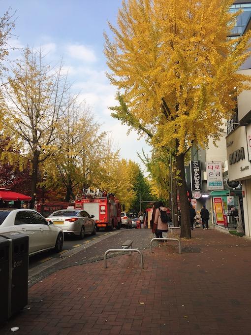 10月:洪川加平、濟州、麗水、井邑 特點:銀杏和秋遊