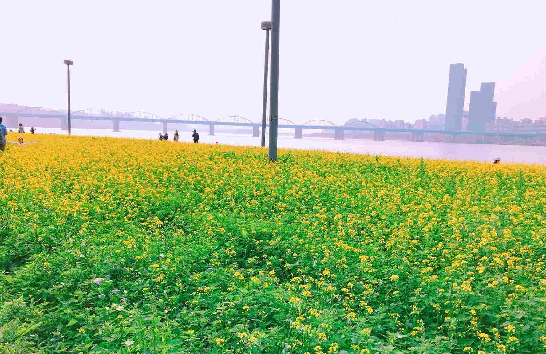 對映漢江的另一頭,穿插著盤浦大橋,景色也同樣美不勝收。