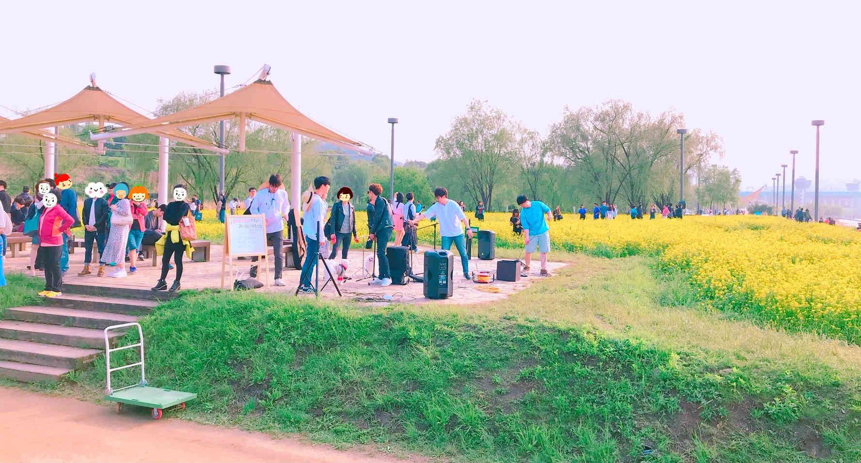 配合油菜花季,首爾市政府也會在此時舉辦各種活動,例如樂團表演等,期望吸引更多人前來觀賞。