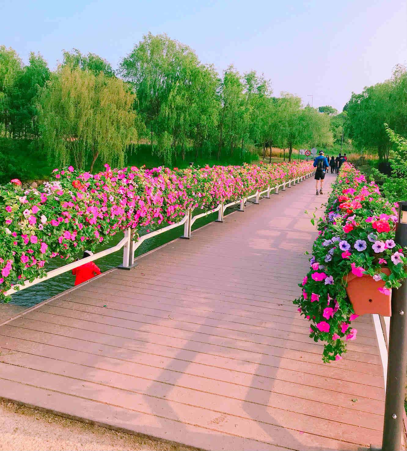 另外,漢江公園與瑞來島之間,是由一座小橋連接而成的,這條小橋也被裝飾得非常漂亮喔!
