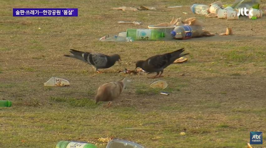 也因為如此,早上都會有一群鴿子跑來這邊吃「早餐」...