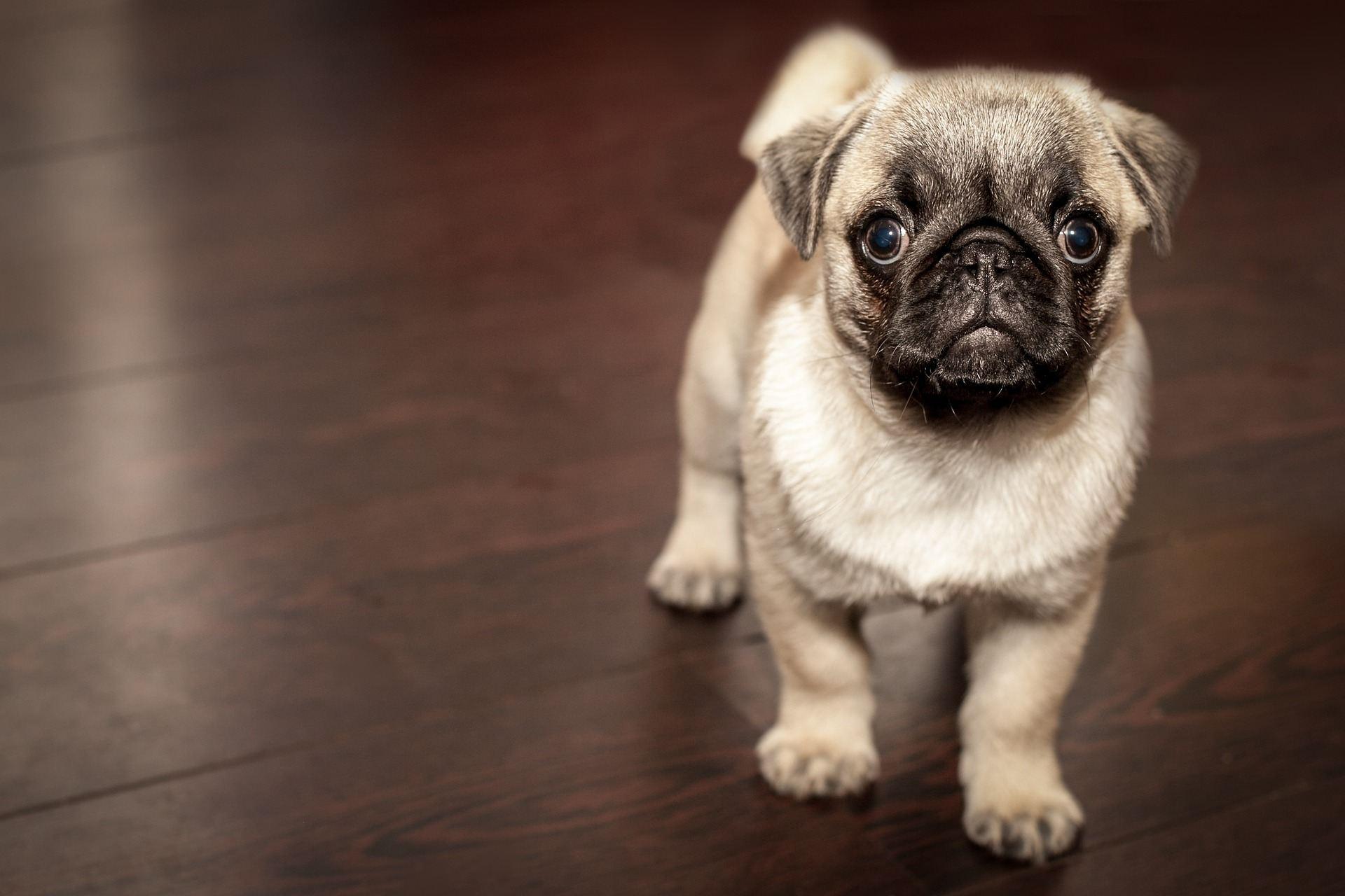 2. 套嘴會增加對狗的厭惡,高樓、汽車、忙碌的人,我們所居住的城市中可以微笑的片刻,可能就是看著狗在街上可愛地揮舞著尾巴。問題是,即使是一隻漂亮的狗,套嘴後都會讓狗看起來很可怕,這也可能增強了對狗的厭惡和防備心。