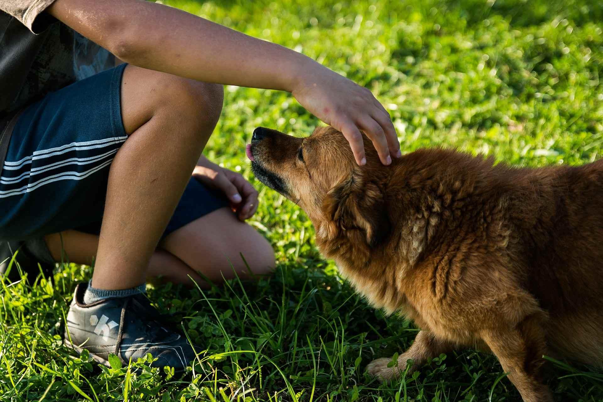 4. 狗的汗腺是透過伸出舌頭來控制體溫,如果使用口罩,可能難以控制體溫,特別是夏天太陽炎熱時。
