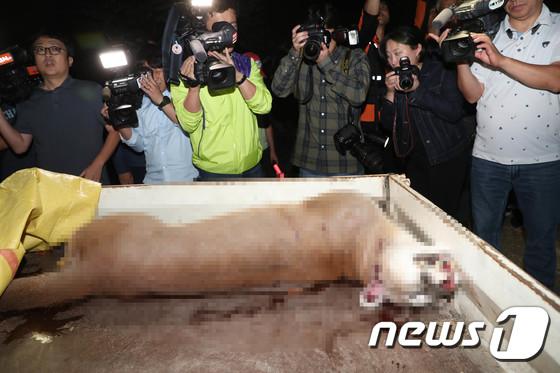 民眾表示,把美洲獅的生命還來、不要將牠製作成標本、應制定完善的動物保護制度等。
