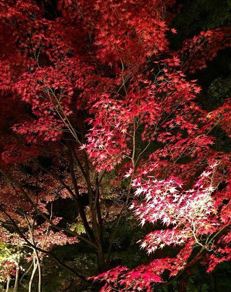 日本賞楓最美的地方,就屬鍬山神社了!雖然相較於其他地方沒那麼出名,但絕對能見到令人如癡如醉的絕佳美景!(光看照片就讓人好想去)