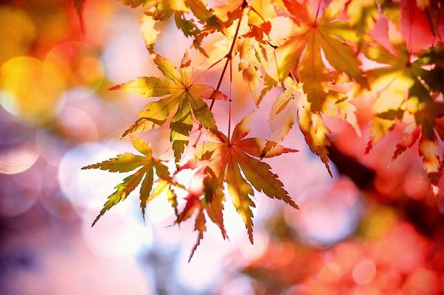 秋天是個讓人倍感憂鬱的季節,韓國醫學研究指出,有3%的成人患有季節性憂鬱症,「想要像秋葉一樣凋零消失⋯⋯」而會有這種惆悵感,全是因為「日照量減少」的影響