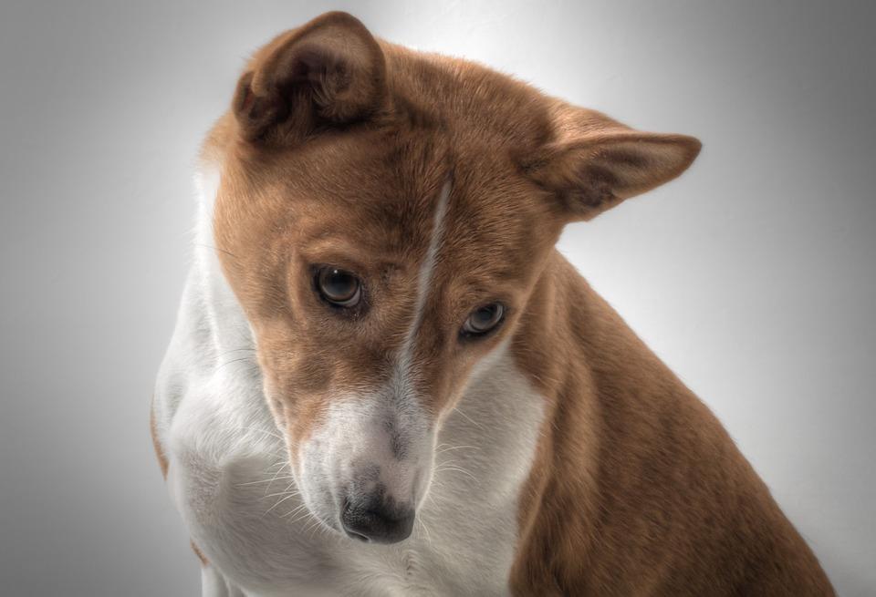 最近一位飼主因為把狗狗放在娃娃機裡拍照,而被網友群起攻擊! 5日,這位主人在網友熱議下道歉了。 自稱為飼主的A女,這天與記者通話並道歉:「在採訪前先對引起這次事件表達深深的歉意,無論如何都會說出真相,非常抱歉」