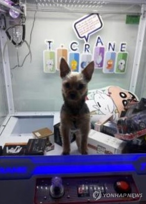 並補充「我也知道我沒有養狗狗的資格,以反省的心會一輩子好好照顧他的」,並針對娃娃機內狗狗的照片會在網路社群和SNS上散播這件事說出原委。
